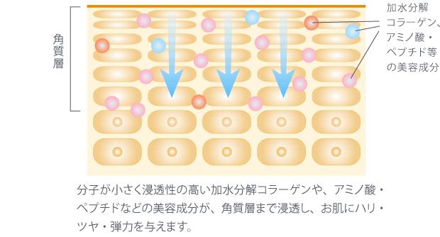 浸透性の高い加水分解コラーゲン・アミノ酸・ペプチドなどの美容成分が、角質層まで浸透し、お肌にハリ・ツヤ・弾力を与えます。